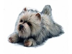 PLUSZOWY PIES CAIRN TERRIER 41 CM 35760